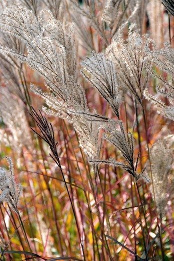 De kracht van vaste planten image