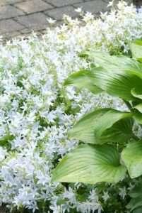 Vaste planten voor in de zon