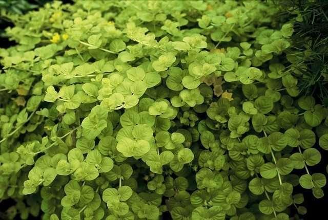 Groen maakt gelukkig image