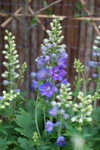 Wat zijn vaste planten?