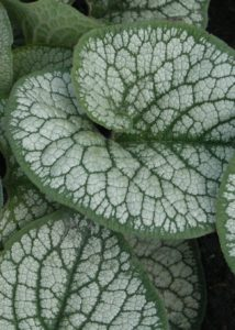 Plants make us happy: Heuchera, Persicaria and Brunnera
