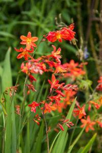 Borderplanten met bloemen