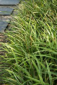 Groenblijvende bodembedekkers