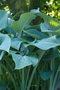 Tuinplanten met blad