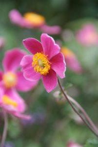 Vaste bloeiende planten
