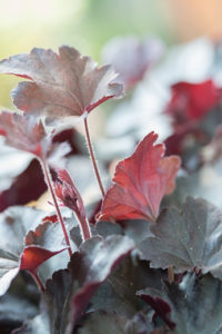 vaste planten winterhard