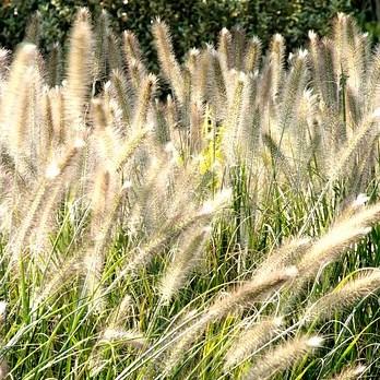 Vaste planten in openbaar groen image