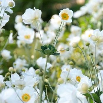 Vaste planten op hun mooist image