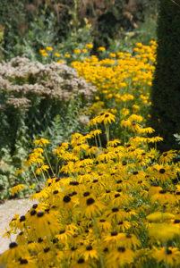 Vaste planten in openbaar groen
