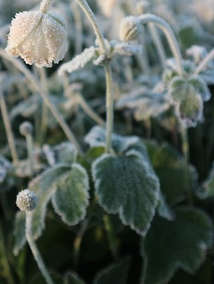 Winterharde planten, bikkels in de tuin image