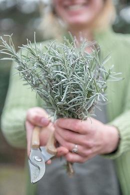 Vaste planten snoeien: waarom, wanneer en hoe image