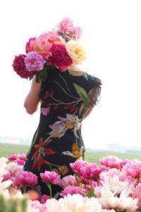 Pioenrozen: flamboyante vaste planten