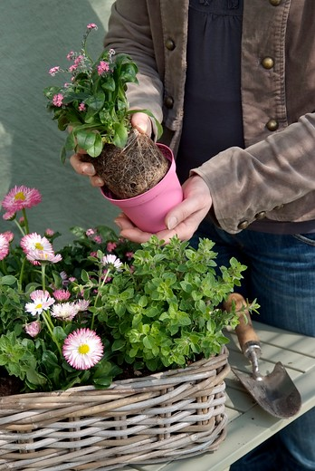 In het najaar vaste planten planten image