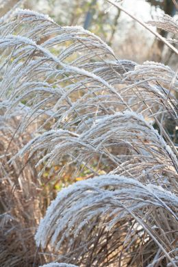 Siergrassen: silhouetten in de tuin image