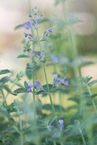 Vaste planten hebben oplossend vermogen voor extreem weer