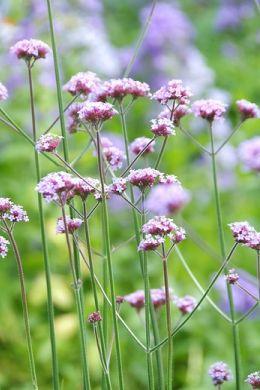 Bloeiende tuinplanten? Vaste planten geven jarenlang plezier image
