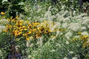 Vaste planten verdienen plaats in ruimtelijke plannen