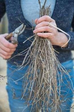 Voorjaarsonderhoudvaste plantenborder
