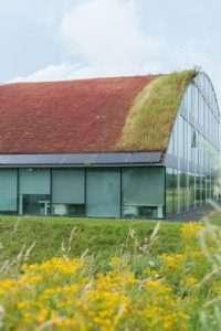 Vaste planten als dakgroen