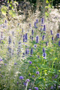 Nieuwe tuintrend: weefplanten