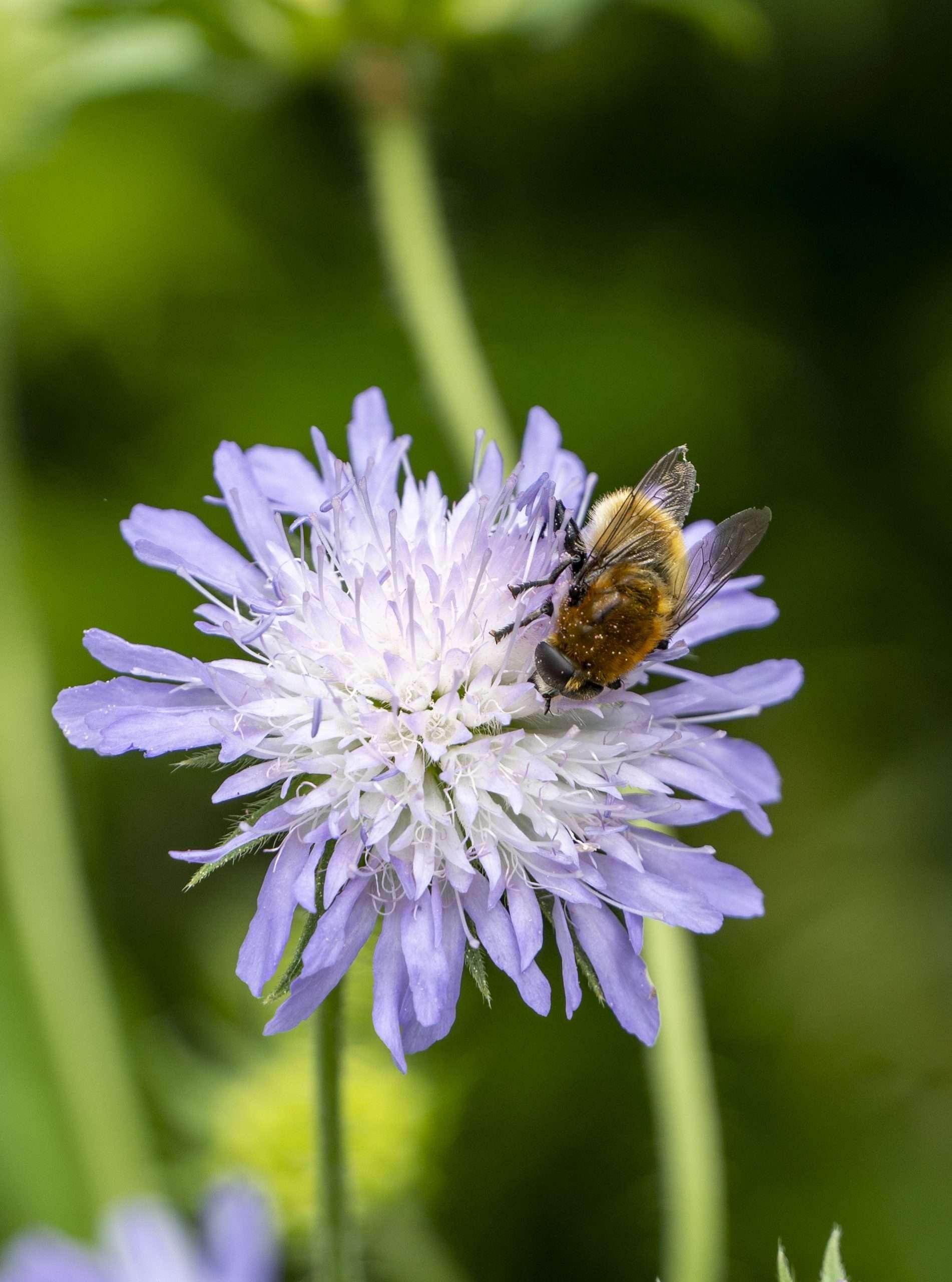 Vaste planten zijn toppers voor biodiversiteit: welkom vlinders, bijen & vogels!