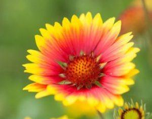 Sierplanten: mooi en meer