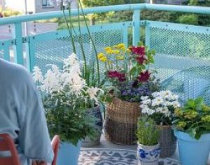Balkonplanten zijn echte blijmakers
